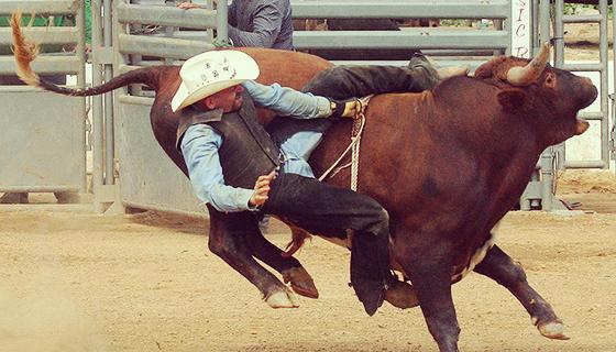 MDNY_bull riding
