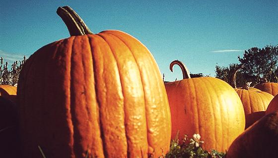 MDNY_pumpkins