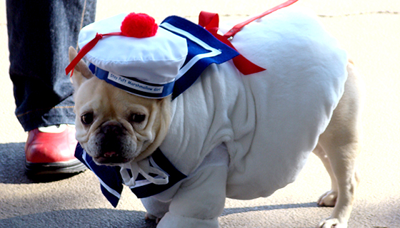 MDNY_dog in costume
