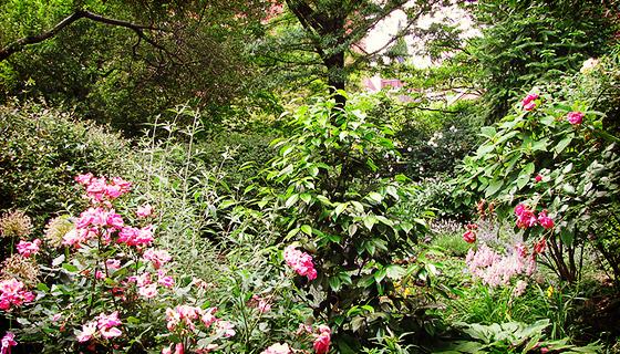 St lukes in the garden