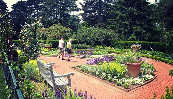 800px-Mae_Wien_Summer_Garden_NYBG_jeh